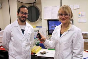 Miguel Ángel González Porras und Merle Ücker vom Max-Planck-Institut für Marine Mikrobiologie in Bremen mit zwei der Bathymodiolus Muscheln im Labor. (C. Kleint, Jacobs University)